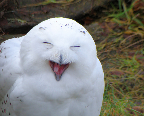 Hedwig está feliz!  foto: Gordy Glen