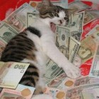 cat-pile-money