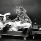 cat doctor3