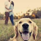 couple-dof-dog-kiss-love-Favim.com-267788